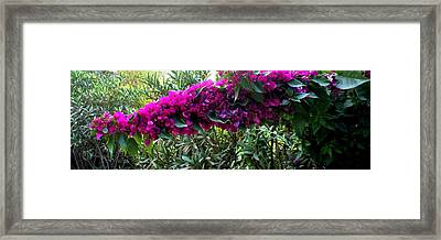 Love Flowers Framed Print