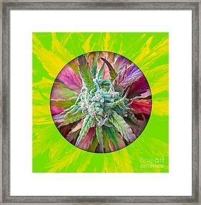 Cannabis 420 Collection Framed Print by Marvin Blaine