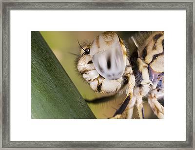 Dragonfly Framed Print by Andre Goncalves