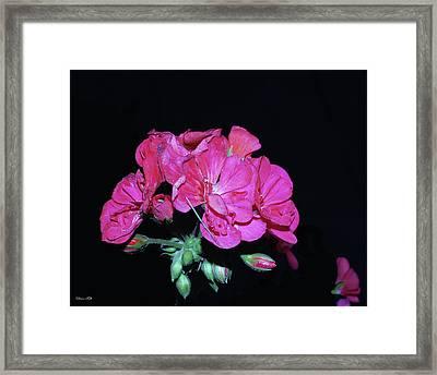 Flower Framed Print by Diane Falk