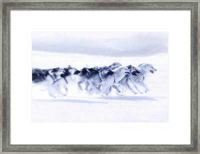 Huskies In Ilulissat, Greenland Framed Print by Joana Kruse