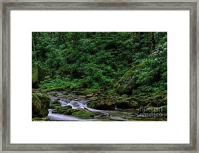 Kens Creek Cranberry Wilderness Framed Print