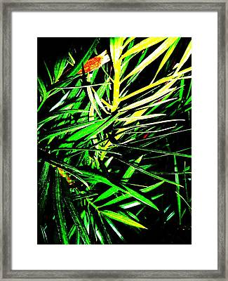 Leaves Framed Print by Jacqueline Doulis