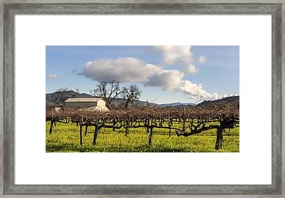 Napa Valley Vineyard Framed Print by Mountain Dreams