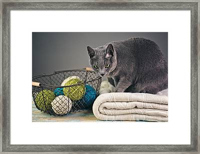 Russian Blue Framed Print by Nailia Schwarz