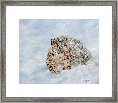 Snow Leopard Framed Print by David Stribbling