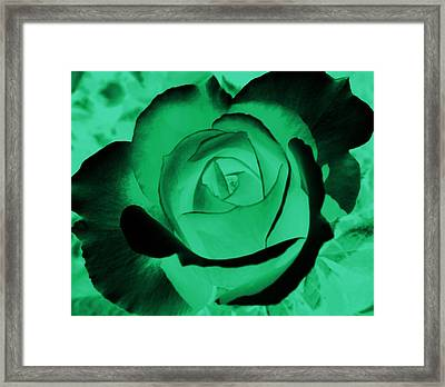 The Green Rose Framed Print by Belinda Cox
