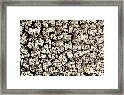 Tree Bark Framed Print by Tom Gowanlock