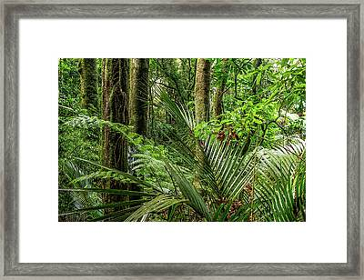 Framed Print featuring the photograph Tropical Jungle by Les Cunliffe