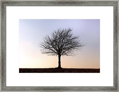 New Forest - England Framed Print