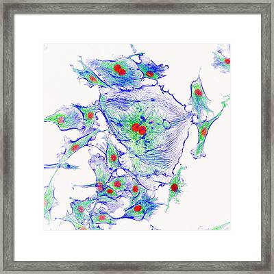 Cell Structure Framed Print