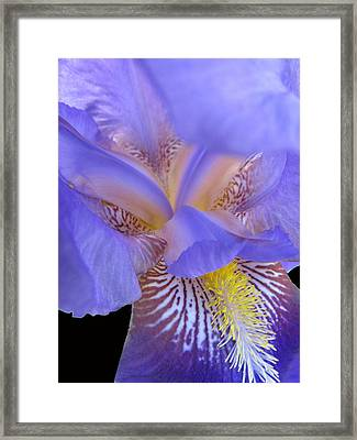 Iris Framed Print by Michele Caporaso