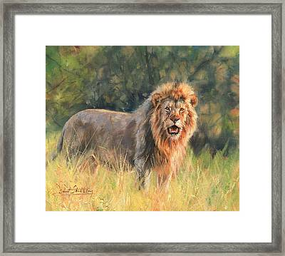 Framed Print featuring the painting Lion by David Stribbling