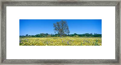 Panoramic View Of Spring Flowers Framed Print by Panoramic Images
