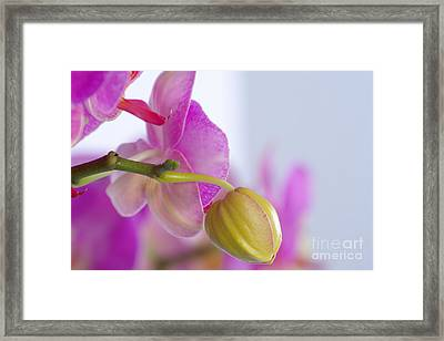 Framed Print featuring the photograph Pink Orchid by Dariusz Gudowicz