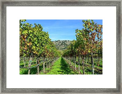 Rows Of Grapevines In Napa Valley California Framed Print