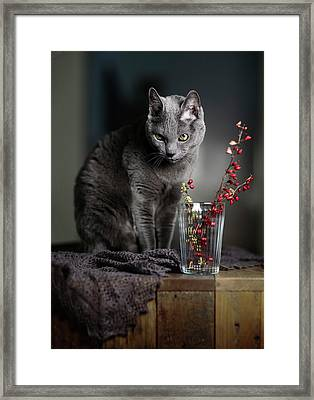 Russian Blue Framed Print