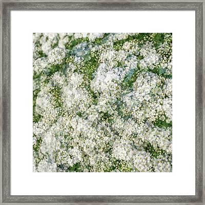 Spring Season - Inspired By Jackson Pollock Framed Print