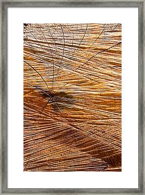 Wood Texture Framed Print by Tom Gowanlock