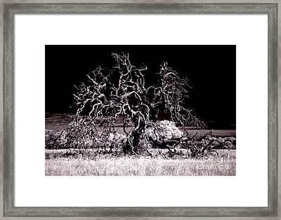 90237 Texas Live Oak Framed Print