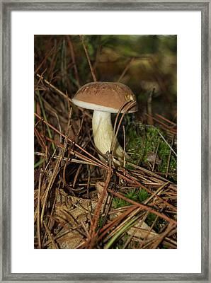 King Bolete 9062 Framed Print by Michael Peychich