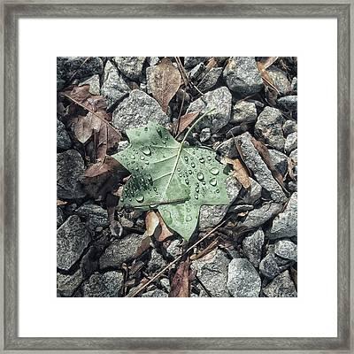 Tree Star Framed Print