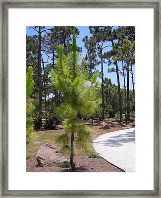 A Baby Tree Framed Print by Stacey Marshall
