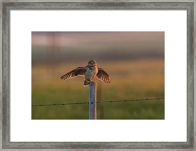 A Balancing Act Framed Print
