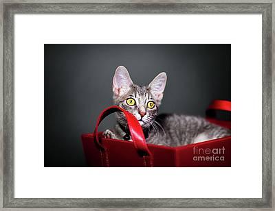 A Basket Full Of Surprises Framed Print