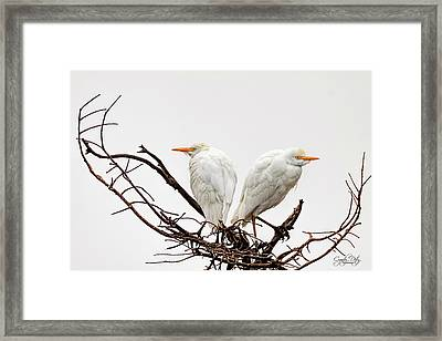 A Basket Of Anger Framed Print