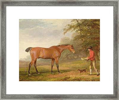 A Bay Horse Framed Print by George Garrard