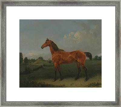 A Bay Horse In A Field Framed Print by Edmund Bristow