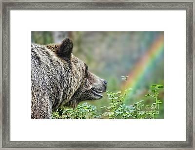 A Bear Watching The Sun Return Framed Print by Jim Fitzpatrick