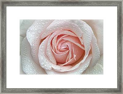 A Beautiful Blush Framed Print