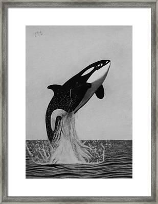 Orca - The Joy Of Freedom Framed Print by Vishvesh Tadsare