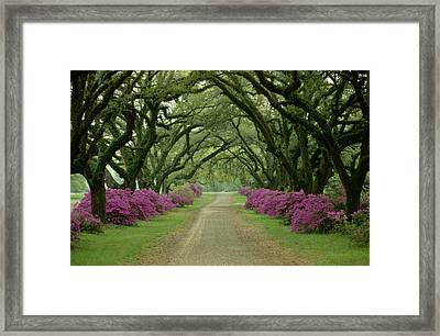 A Beautiful Driveway Lined With Trees Framed Print