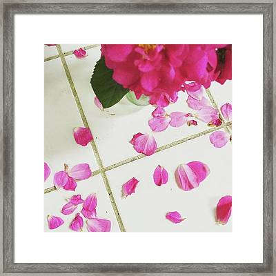 A Beautiful Mess.  #summer #roses Framed Print