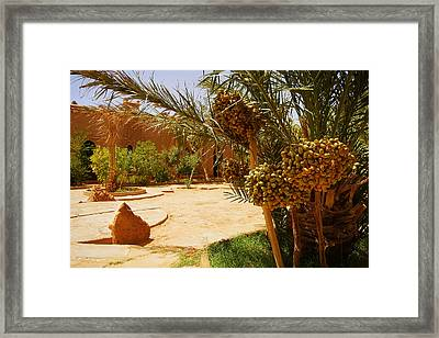 A Beautiful Moroccan Garden With Date Palm Trees With Riping Dat Framed Print