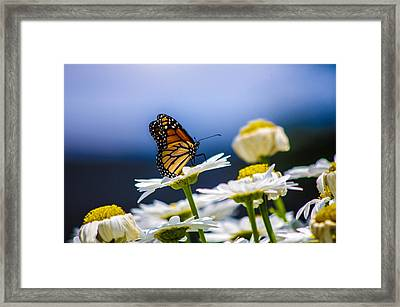 A Beautiful View  Framed Print