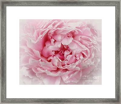 A Beauty At Close Range Framed Print by Jutta Maria Pusl