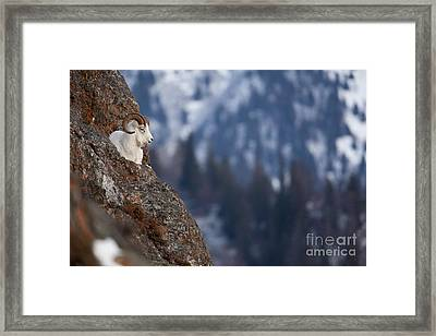 A Bed For One Framed Print by Tim Grams