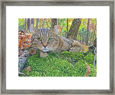 A Bed Of Moss Framed Print by Susan Leggett