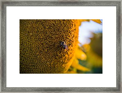 A Bee On The Sun Framed Print by Kristopher Schoenleber