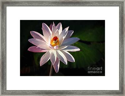 A Bee's Moment Framed Print by Liesl Walsh