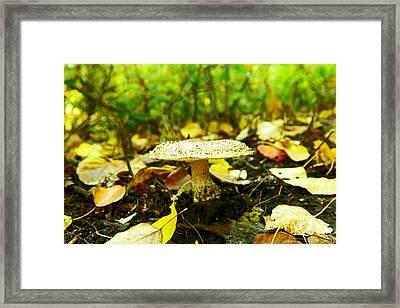 A Big Mushroom Framed Print by Jeff Swan