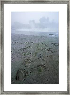 A Bird And A Brown Bear Left Prints Framed Print