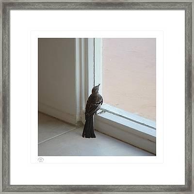 A Bird At A Plate Glass Window Framed Print by Stan  Magnan