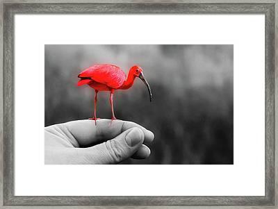 A Bird In Hand Framed Print