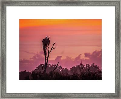 A Birdie Morning Framed Print