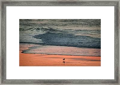 A Bird's Eye View Framed Print by Karen Wiles